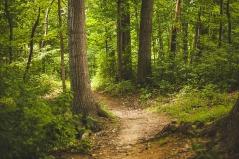 Achtsames Gehen Wald