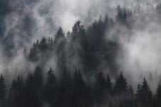 nebel-schleier-verbindung-rauhnacht